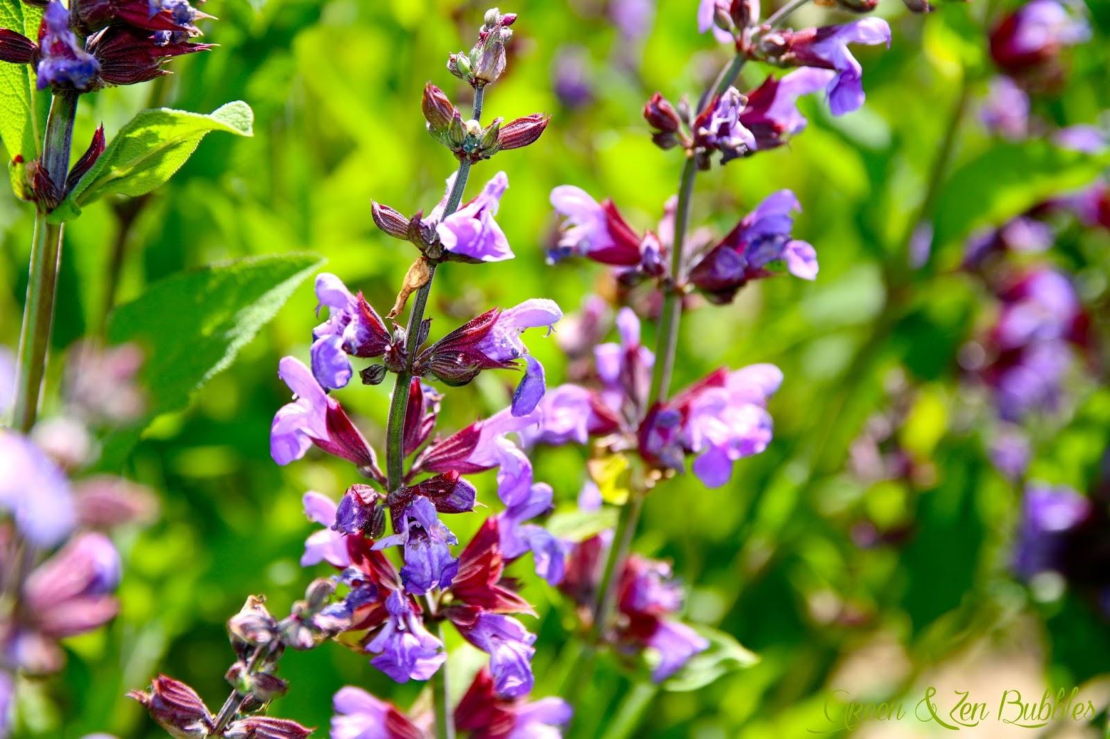 Aidez les abeilles grâce à ces six plantes